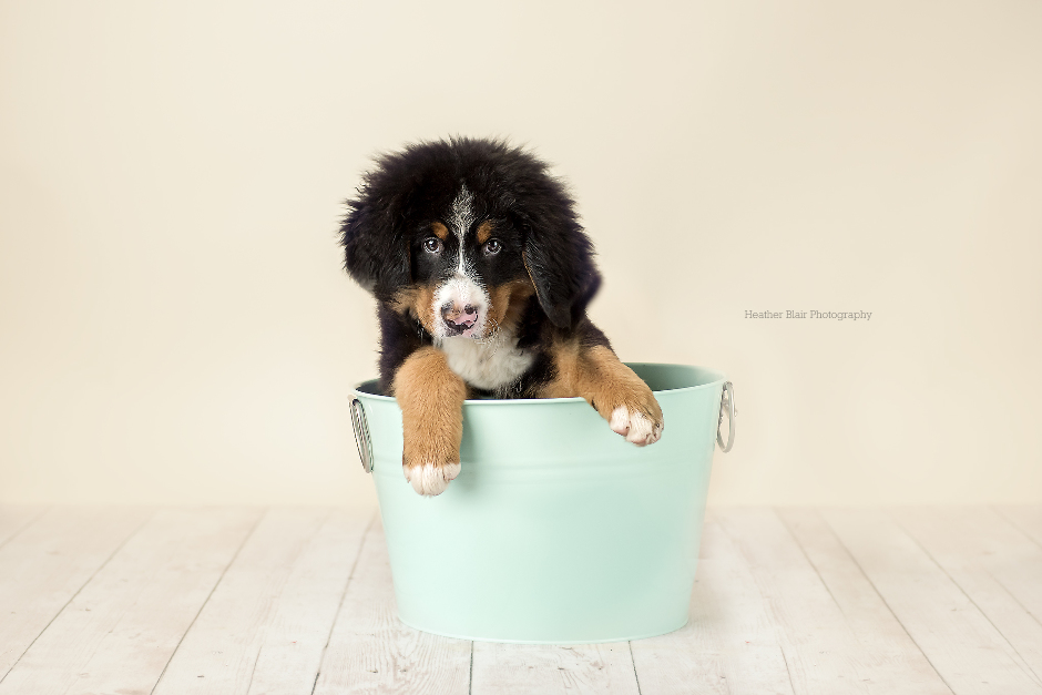 Pup in a bucket